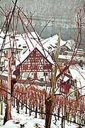 10992 - Photo - Suisse alémanique, Les vignes surplombent Eglisau (Zurich) et le Rhin