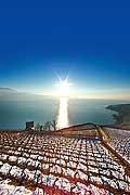 10994 - Photo : Suisse, canton de Vaud, Tour de Marsens, vignoble de Lavaux en terrasses, et le Lac Léman - UNESCO