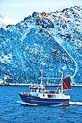 11045 - Photo :  Norvège,  Arctique, îles Lofoten, la pêche aux Skrei  un cabillaud pas comme les autres
