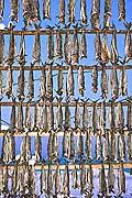 11106 - Photo :  Norvège,  Arctique, îles Lofoten, village de Myre, séchage de la morue