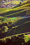 12002 - Photo: Suisse, Valais, vignoble entre Sensine et Daillon ( conthey ), switzerland, swiss wines - wein, schweiz