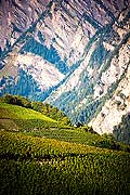 12003 - Photo: Suisse, Valais, vignoble entre Sensine et Daillon ( conthey ), switzerland, swiss wines - wein, schweiz