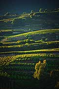 12004 - Photo: Suisse, Valais, vignoble vers conthey, switzerland, swiss wines - wein, schweiz