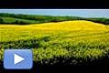 12032 - Vidéo - France - La danse du colza