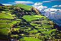 12785 - Photo: Suisse, Valais, vignoble, switzerland, swiss wines - wein, schweiz