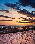 12822 - Photo : Suisse, vignoble de Genève - le coteau de la Donzelle à Dardagny, Geneva, switzerland, swiss wines - wein, schweiz