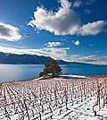12834 - Photo: Suisse, canton de Vaud, vignoble de Lavaux sous la neige et le Lac Léman - UNESCO