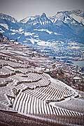 12835 - Suisse, canton de Vaud, vignoble de Lavaux sous la neige et le Lac Léman