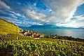 13100 - Photo : Suisse, canton de Vaud, Epesses, vignoble de Lavaux, et le Lac Léman - UNESCO
