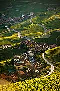 13105 - Photo : Suisse, Epesses et Riex, canton de Vaud, vignoble de Lavaux - UNESCO