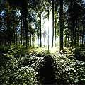13160 - La forêt du Jorat et ses Brigands