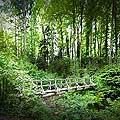 13161 - La forêt du Jorat et ses Brigands