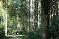 13162 - La forêt du Jorat et ses Brigands