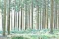 13163 - La forêt du Jorat et ses Brigands