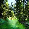 13164 - La forêt du Jorat et ses Brigands