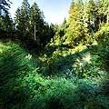 13165 - La forêt du Jorat et ses Brigands