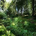 13166 - La forêt du Jorat et ses Brigands