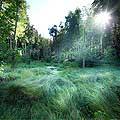 13167 - La forêt du Jorat et ses Brigands