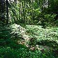13168 - La forêt du Jorat et ses Brigands