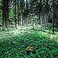 13170 - La forêt du Jorat et ses Brigands