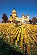 2704 - Photo : Suisse, Canton de Vaud - Château de Vufflens - vignoble de La Côte