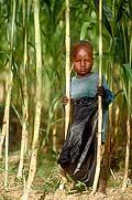 3576 - Nord Cameroun - portrait d'enfant