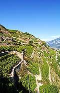 3586 - Valais - Sion - Mont d'Or