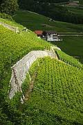 4499 - Suisse - Yvorne dans le Chablais - Clos du Rocher