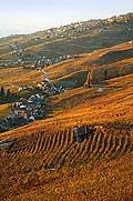 4916 - Lavaux en automne, Epesses et Riex - Suisse