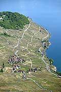 4919 - Lavaux, Epesses et le lac Léman - Suisse