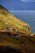 4920 - Vignoble de Lavaux en automne et le lac Léman - Suisse