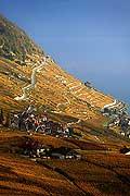 4921 - Vignoble de Lavaux en automne et le lac Léman - Suisse