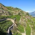 4931 - Vignoble en Valais, Sion - Suisse