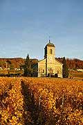 4985 - Vignoble de la Côte - canton de Vaud - Suisse