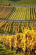 4988 - Vignoble de la Côte - canton de Vaud - Suisse