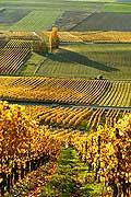 4989 - Vignoble de la Côte - canton de Vaud - Suisse