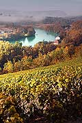 4997 - Vignoble de Genève - coteau de la Donzelle et le Rhône - Suisse
