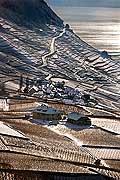5199 - Suisse, Lavaux, vignoble sous la neige et le lac Léman