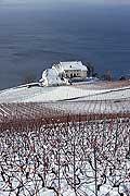 5200 - Suisse, Lavaux sous la neige, Château de Montagny