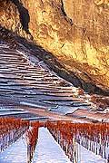 5205 - Valais, vignoble sous la neige vers Chamoson