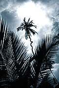 8135 - Photo : île de Zanzibar, Tanzanie, Afrique