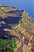 8326 - Photo : vue aérienne, Suisse, canton de Vaud, vignoble de Lavaux,  Lac Léman