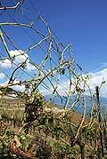 8348 - Photo : Suisse, canton de Vaud, vignoble de Lavaux suite à la grêle de 2005