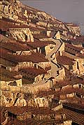 8505 - Photo : Suisse,  canton de Vaud, vignoble de Lavaux en terrasses - Saint-Saphorin
