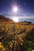 8508 - Photo : Suisse,  canton de Vaud, vignoble de Lavaux, Lac Léman
