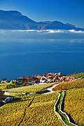 8512 - Photo : Suisse,  canton de Vaud, vignoble de Lavaux, Rivaz, Lac Léman