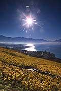 8514 - Photo : Suisse,  canton de Vaud, vignoble de Lavaux, Lac Léman