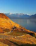 8518 - Photo : Suisse,  canton de Vaud, vignoble de Lavaux, Lac Léman