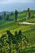 8538 - Photo : Suisse,  vignoble de Genève - le coteau de la Donzelle à Dardagny