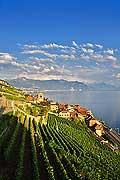 9391 - Photo : Suisse, canton de Vaud, vignoble de Lavaux en terrasses - Saint-Saphorin, Lac Léman